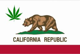 California Bear Marijuana